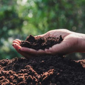 square-hand-holding-soil-hands-planting-with-copy-space-insert-text